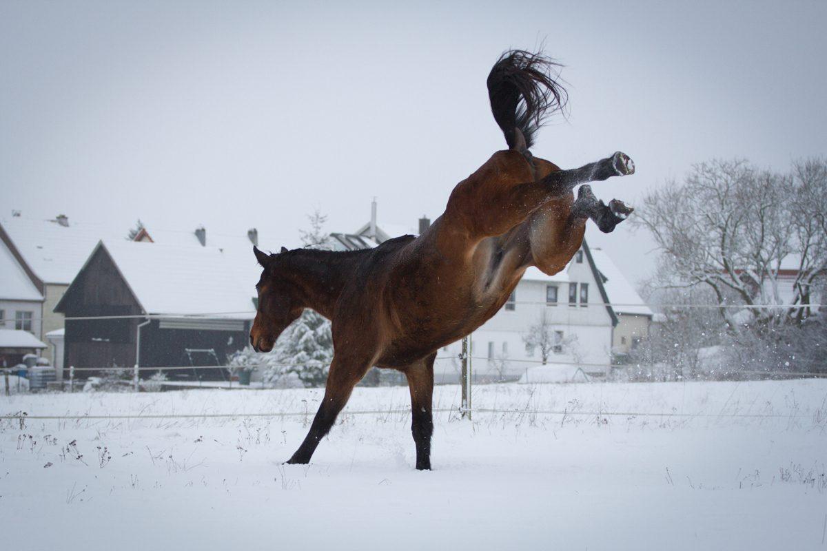 warum du niemals ein pferd kaufen solltest horse diaries. Black Bedroom Furniture Sets. Home Design Ideas
